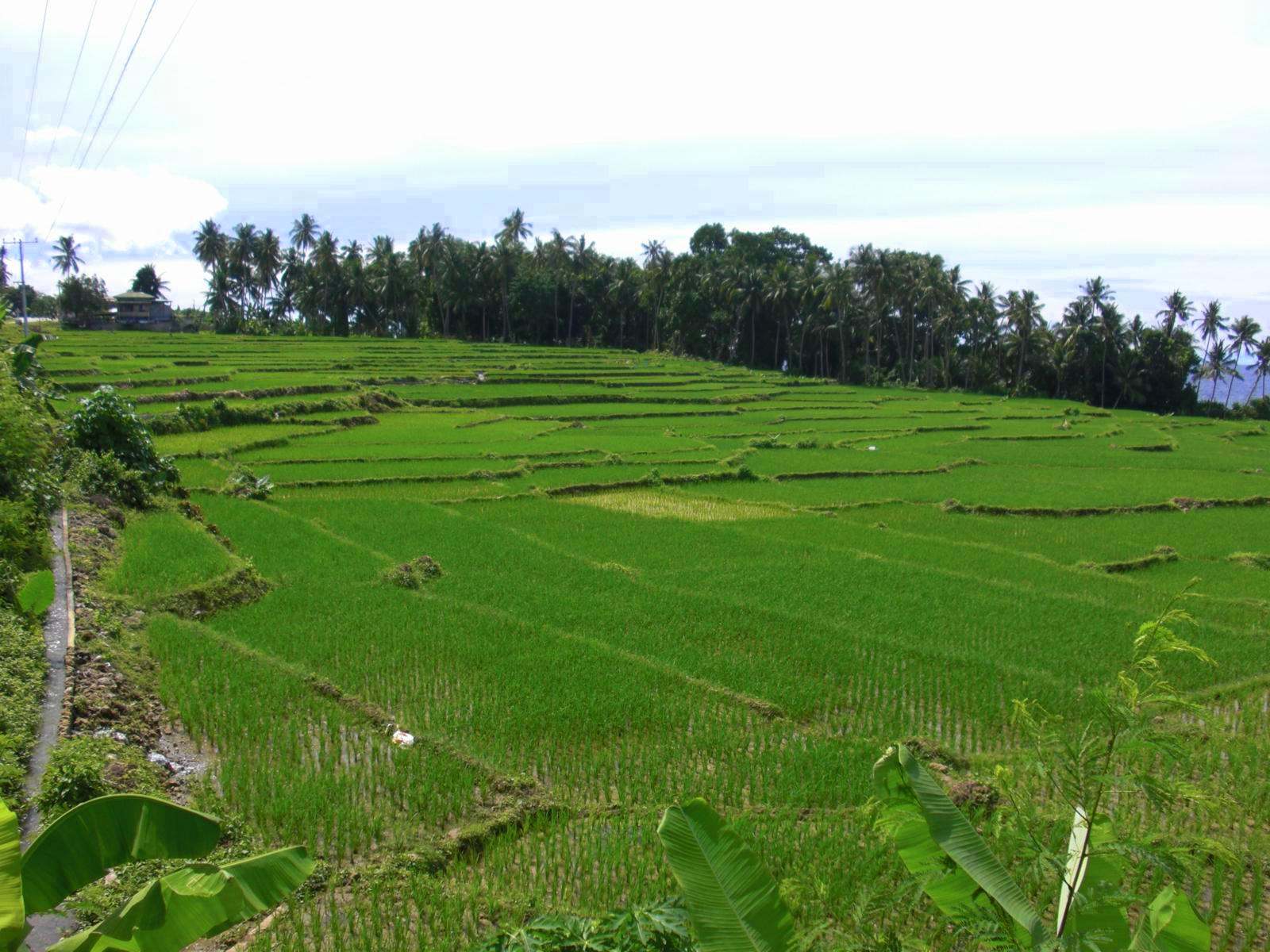 tiguis-rice-terraces